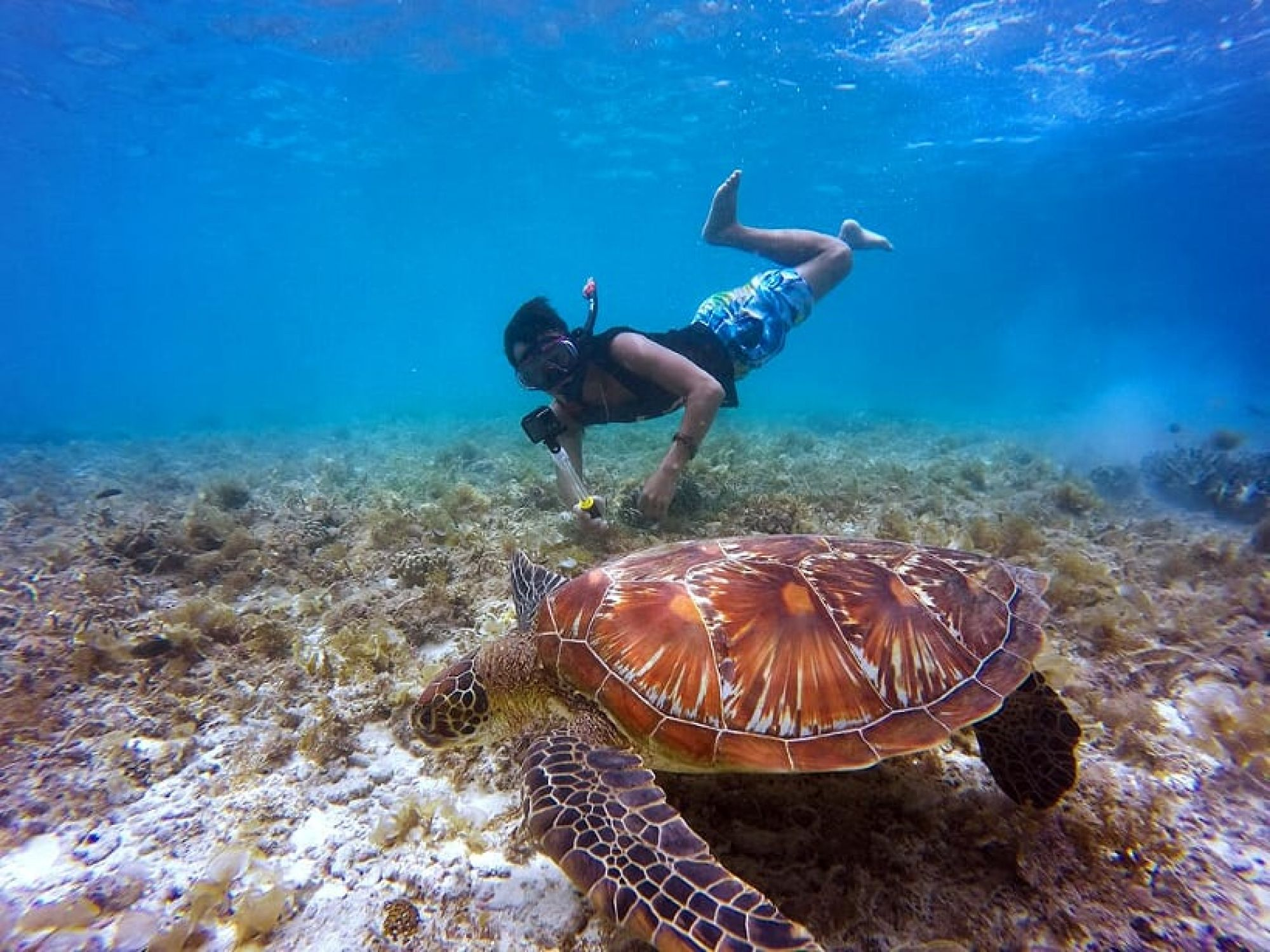 Snorkelling in Australia - Live an Exciting Experience